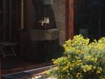 Náš zenový kocour Matěj na půl venkovní